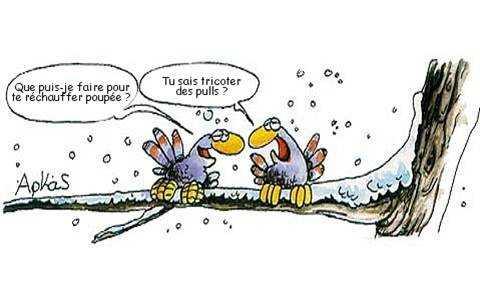 """Résultat de recherche d'images pour """"oiseau humour"""""""
