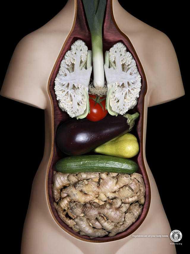Sciences et vie de la terre l 39 int rieur du corps humain for Interieur du corps humain